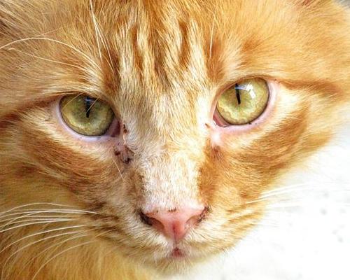 на морде у кота черные пятнышки