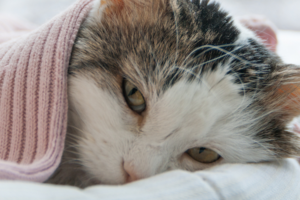 Стоит ли что-то делать, если у кошки появилась сыпь на коже?