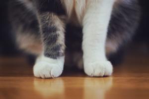 Как понять, что у кошки болит лапа?