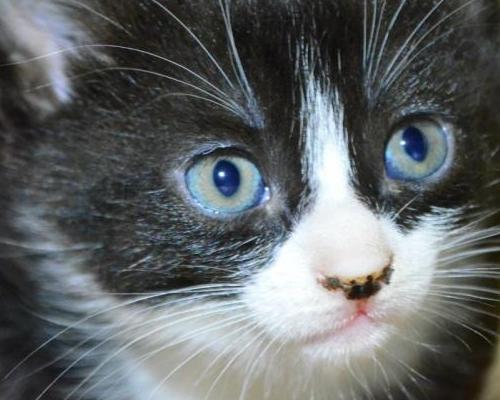 у котенка черные пятна на морде