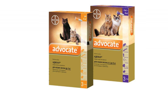 адвокат от блох для кошек