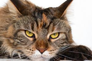 черные крупинки на яичках у кота