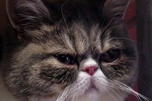 черные точечки на яичках у кота