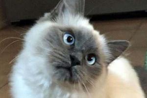 кошка клонит голову на бок
