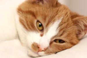 панлейкопения у кошки симптомы