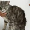 Как подобрать эффективный препарат от зуда для кошки?