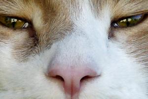 ринотрахеит у кошки симптомы