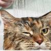 Как выбрать хороший шампунь от блох для кошки?