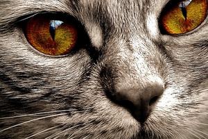 у кошки из глаза идет кровь