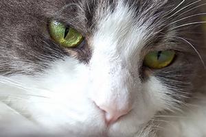 у кошки из глаза пошла кровь