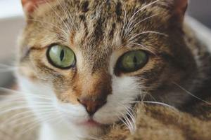 у кошки корочки вокруг глаз