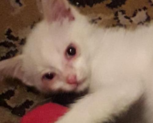 у кошки покраснело веко глаза