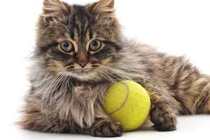 у кошки постоянно хрустят суставы