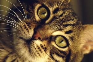 у кота голова наклонена на бок