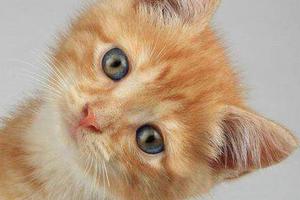 у котенка голова кренится на бок