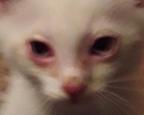 у котенка покраснело веко
