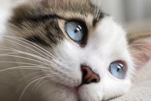 у молодой кошки хрустят суставы