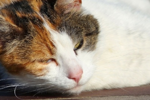цистит у кошки признаки