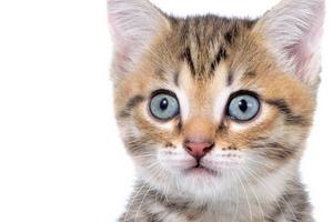 кашель у котенка