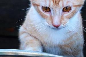 кошка мало пьет воды и мало ест