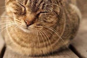 кошка поджимает переднюю лапу когда сидит