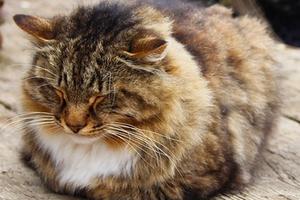 кошка поджимает передние лапы