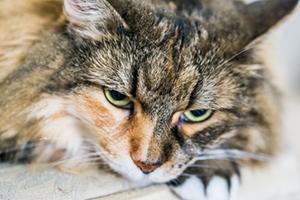 кошка постоянно сопит при дыхании