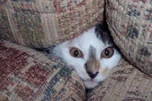 кошка прячется в темные места и не откликается