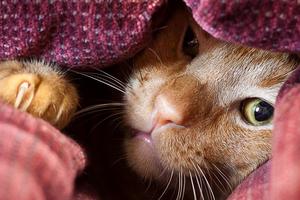 кошка прячется в темные места и спит