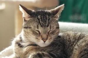 кошка сопит при дыхании когда спит
