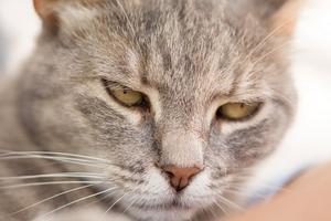 пиометра у кошки признаки
