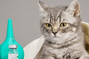 приступ астмы у кошки