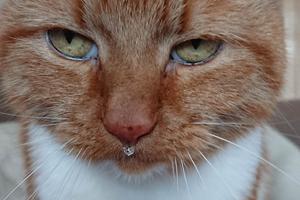 сильный насморк у кошек