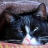 Причины и лечение болей в горле у кошек