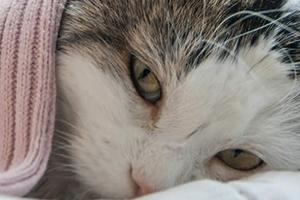 у кошки болит горло и отказ от еды