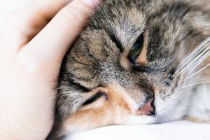 у кошки сильно болит горло