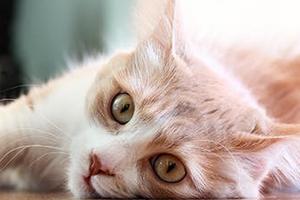 у кошки сильно дергается лапа