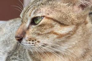 у кошки заложен нос и дышит ртом