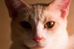 у кошки заложен нос и кашель