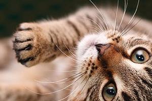 у кота дергается лапа