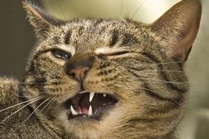 учащенное дыхание у кошек