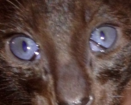 белая пленка на глазу у кота