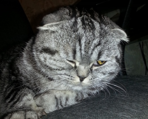 белая пленка на глазу у котика