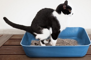 черный кал у кота