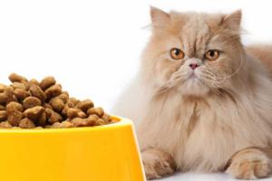 Как выбрать хороший корм для персидской кошки?