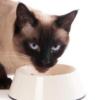 Как выбрать хороший корм для сиамской кошки?
