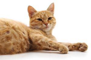 кошка не ест после сложных родов