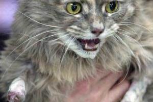 кошка обморозила лапы