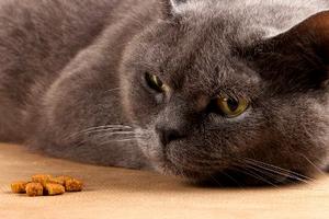кошка после стерилизации не ест и не пьет