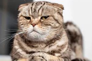 кошка волочит задние лапы после падения